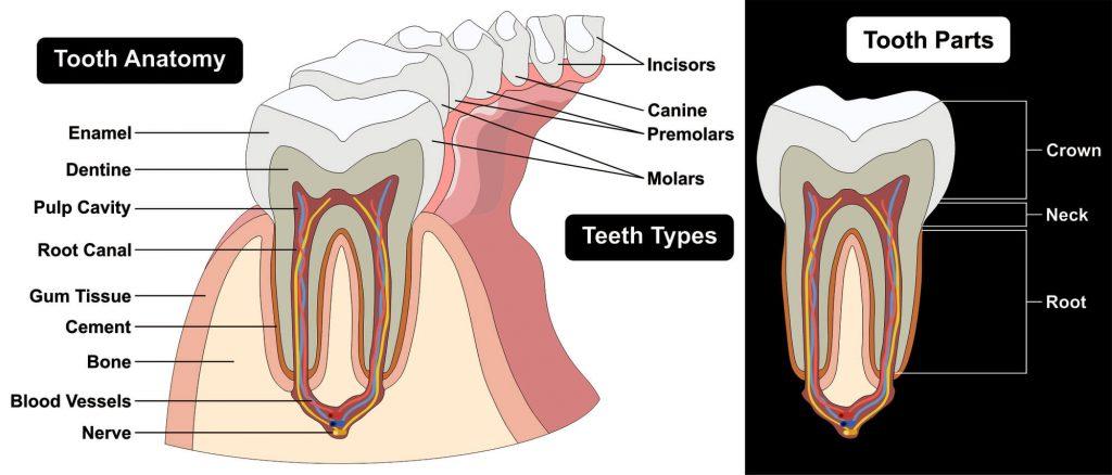 Dentist in Lake Worth FL